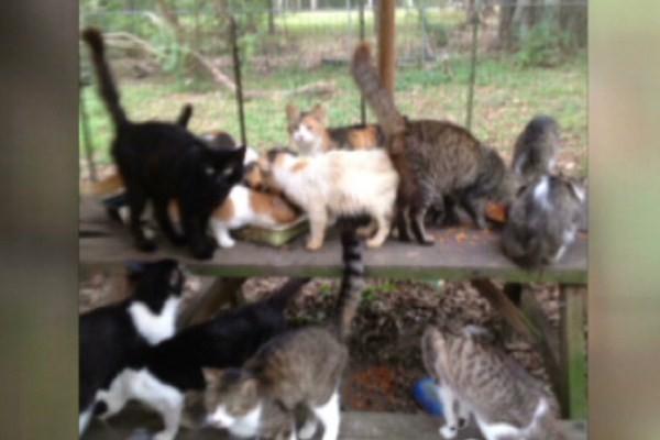 Salvan a más de 1.000 gatos de ser comidos en China
