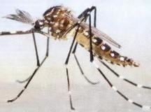 Manzur y Urtubey supervisan en Salta acciones de prevención del dengue