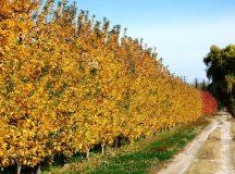 Cipolletti: frenan las multas a tierras improductivas